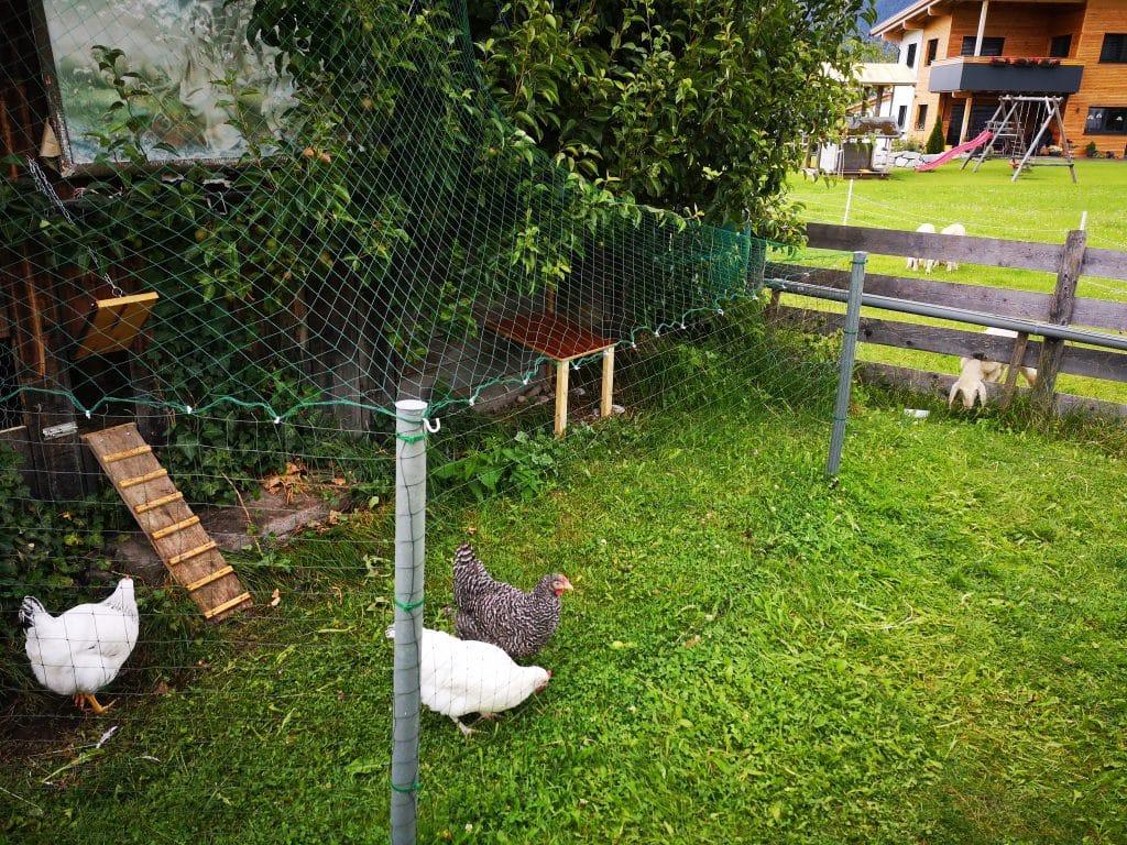 Hühnergehege DIY