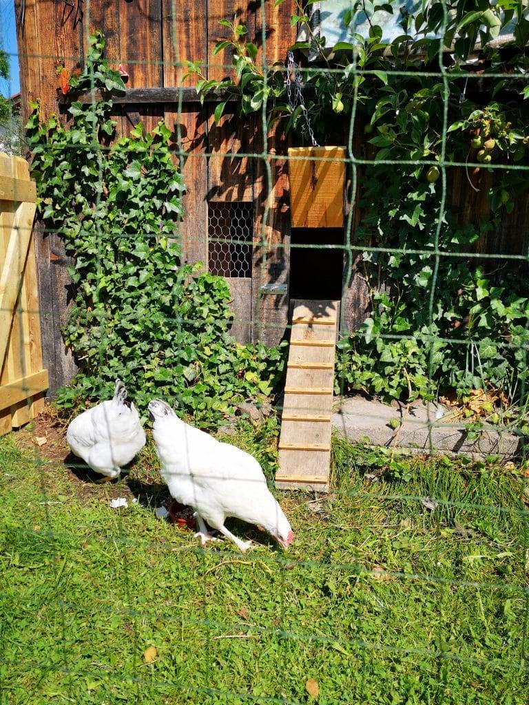 Hühnergehege selber bauen